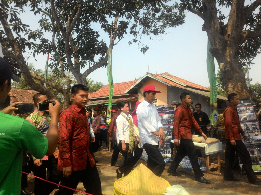 Presiden Jokowi saat menghadiri panen bersama padi varietas IPB 3S di Desa Cikarang, CIlamaya wetan, Karawang